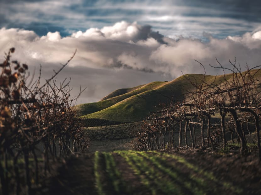 How climate change is affecting the taste and structure of the wines you drink