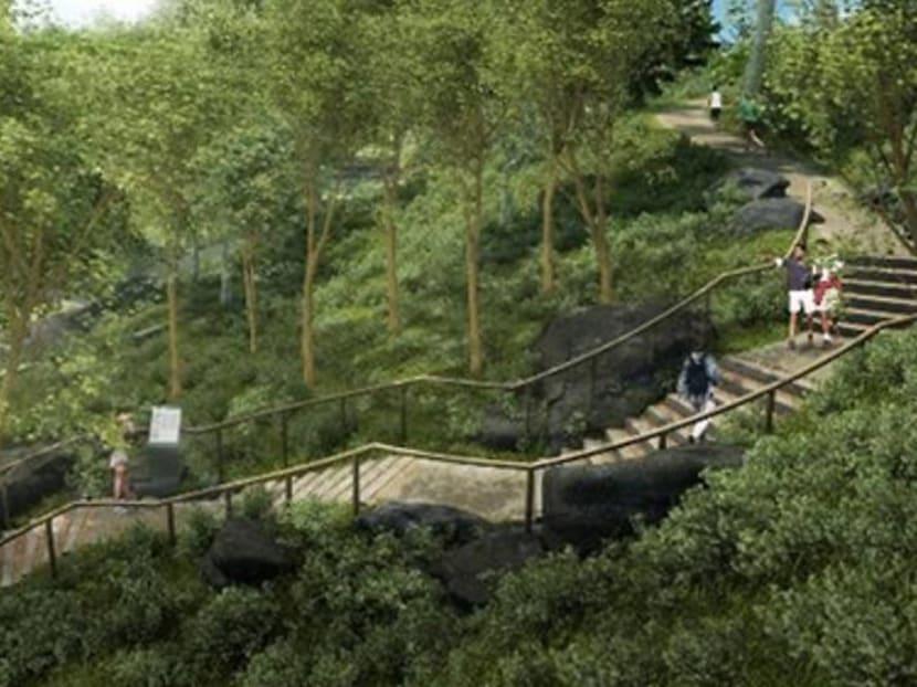 New ridge walk opens at Singapore Botanic Gardens as part of Gallop extension
