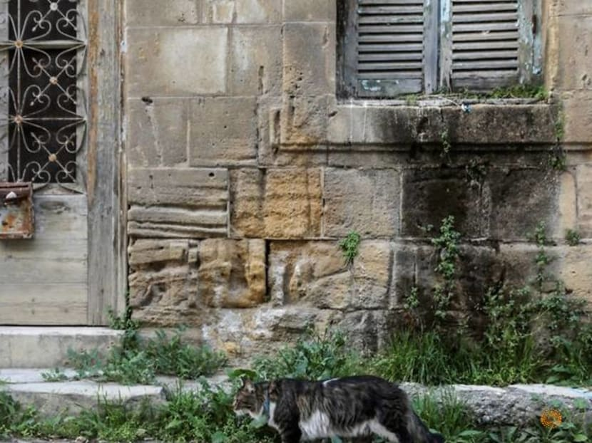 Despite ancient cat connections, Cyprus is swamped with strays