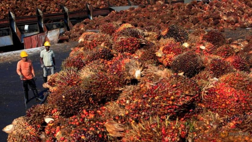 Malaysian palm giant IOI faces labour abuse allegations in new report