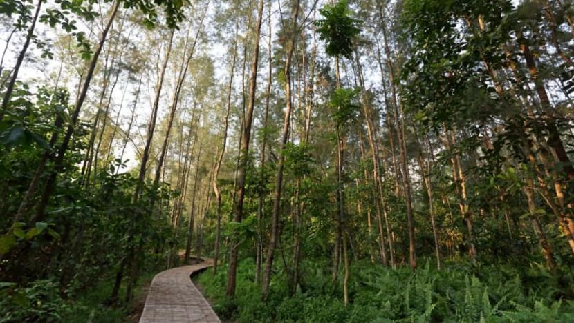 A walk on the wild side: Singapore's upcoming nature attractions