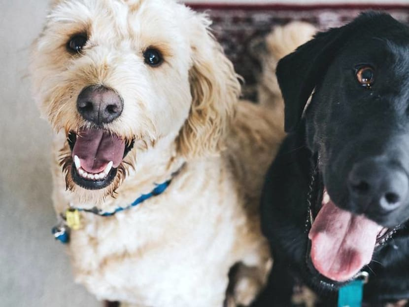 What makes dogs so special? Science shows it's because they love you