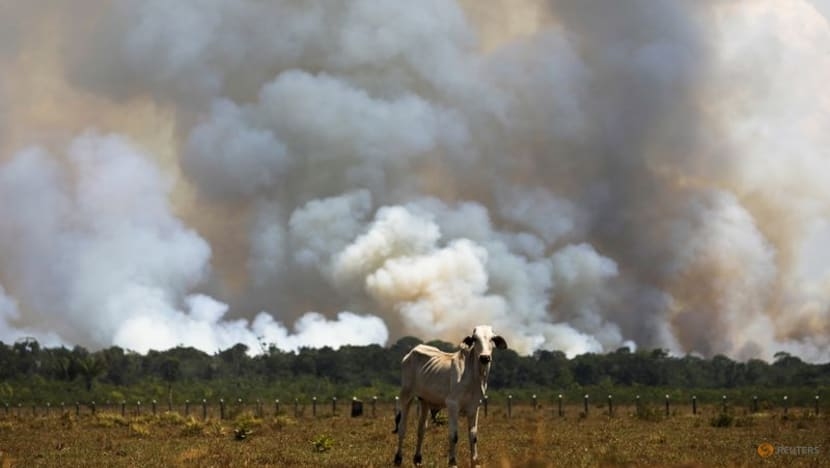 Deforestation in Brazil's Amazon falls for second month, remains high