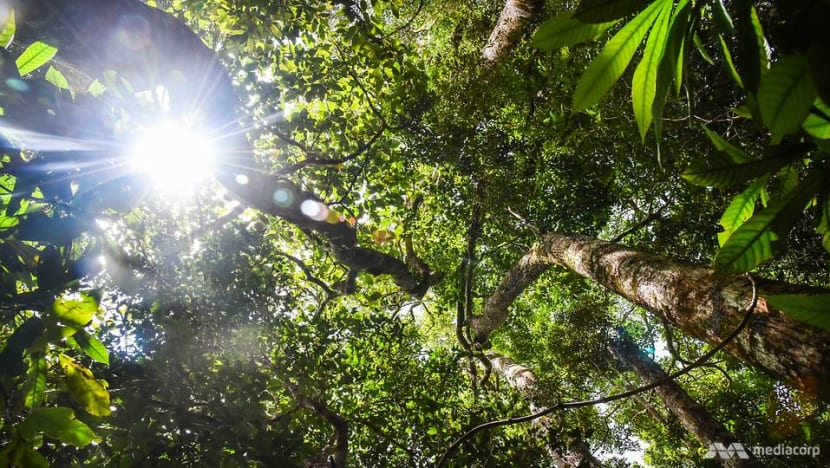 COVID-19: Why saving our forests can help stop the next pandemic