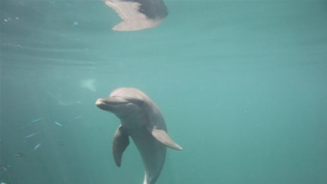 海豚撞墙视频惹争议 公园局:名胜世界海豚无异样