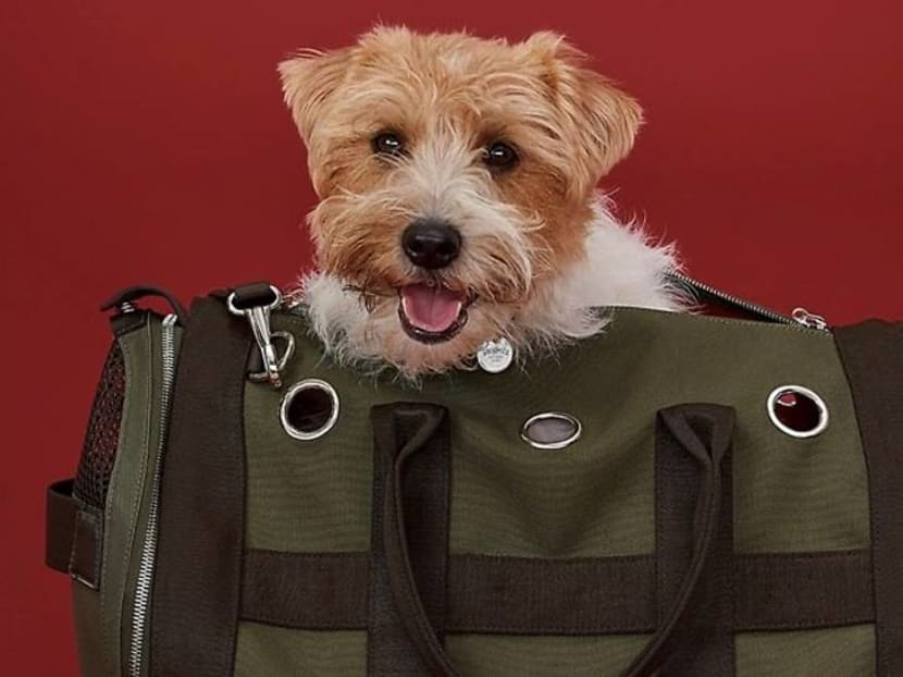 7 stylish pet accessories for when you're taking your furkid out for a walk