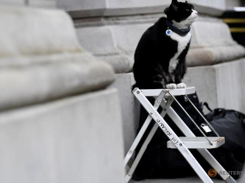 British Foreign Office cat heads for retirement, mouse-catching duties for diplomats come to an end