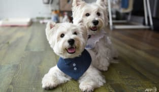 Digital doggies: Pet influencers are on the rise in Singapore