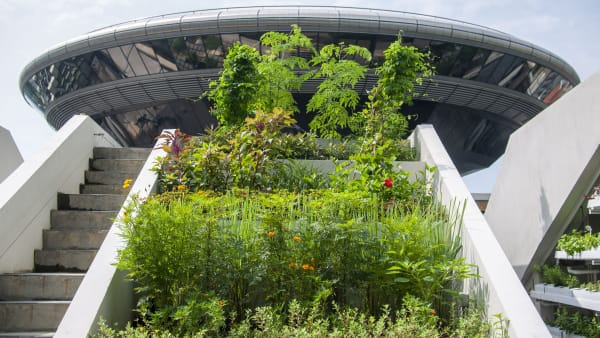 Spider researcher, Edible Garden City among 5 winners of President's Award for the Environment