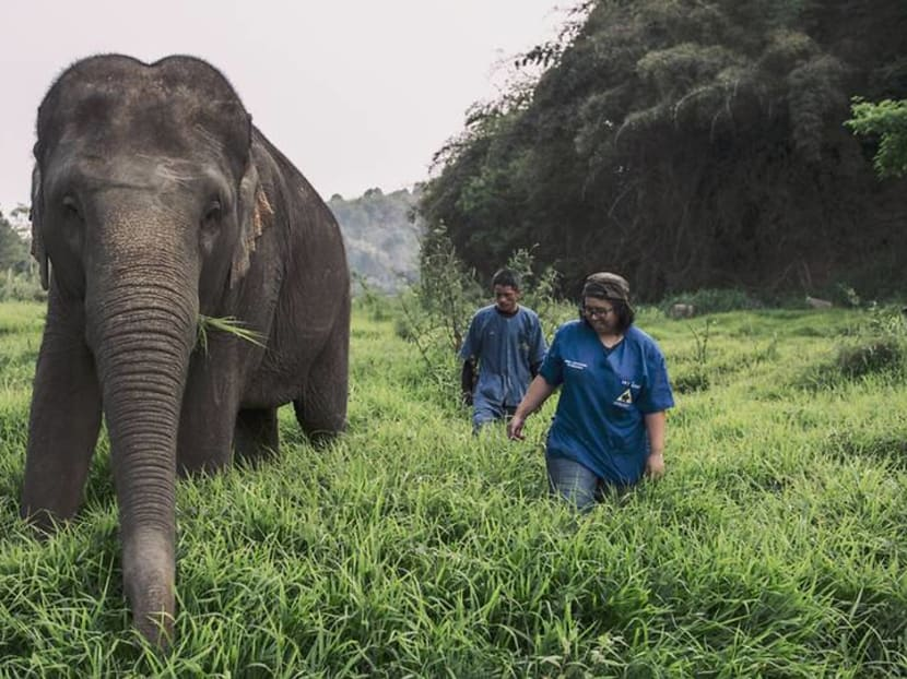 For US$75, you can Zoom with elephants in Thailand and help fund their care