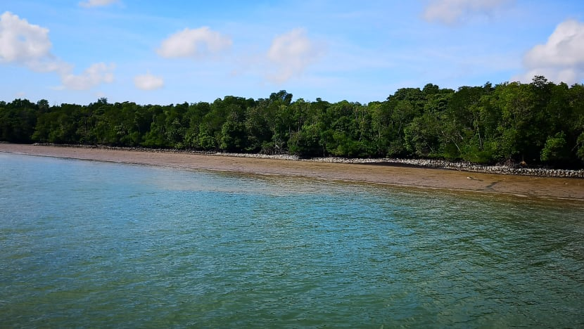 Coastal protection projects to build resilience of Singapore's coastlines at Pulau Ubin