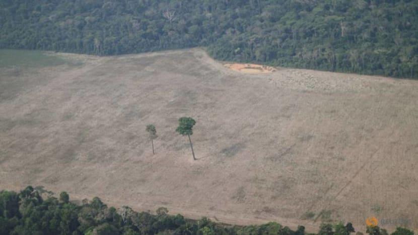 Deforestation in Brazil's Amazon skyrockets to 12-year high under Bolsonaro