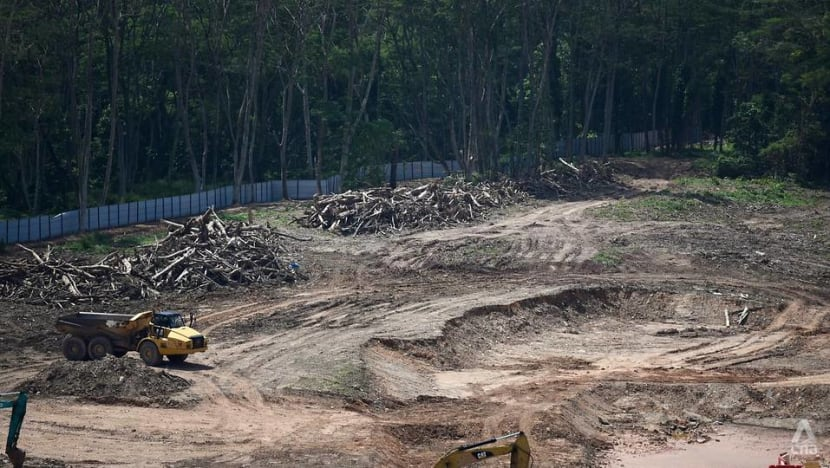 Kranji woodland clearance: 'Gaps' in project management, directions for 'immediate' follow-up issued, says Chan Chun Sing