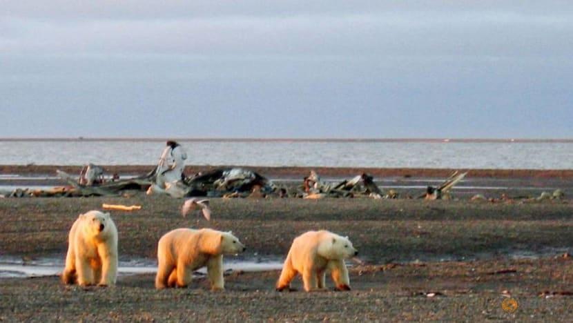 Trump administration finalizes oil drilling plan in Alaska wildlife refuge