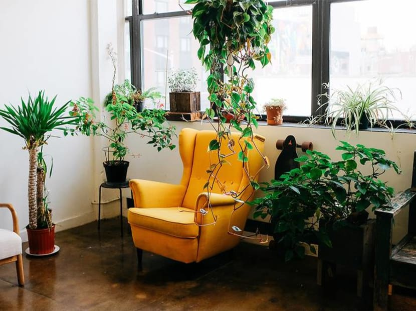 Why your indoor plants are dying – and how to make them thrive