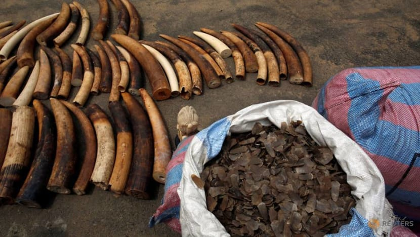 Thousands of animals saved in global crackdown on wildlife crime