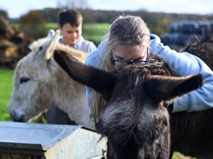 'The cow can't tell my secrets' - UK care farms a lifeline during pandemic