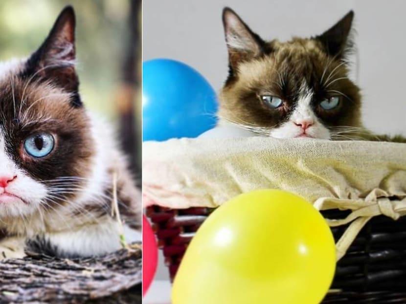 Grumpy no more: Feline Instagram and Twitter star Grumpy Cat dies, aged 7