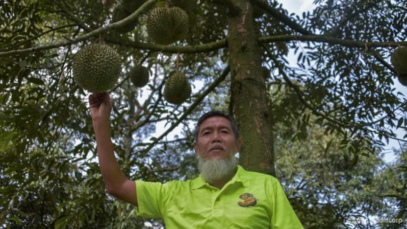 Musang King millionaires: Pahang town's durian businessmen turn wealthy as demand increases
