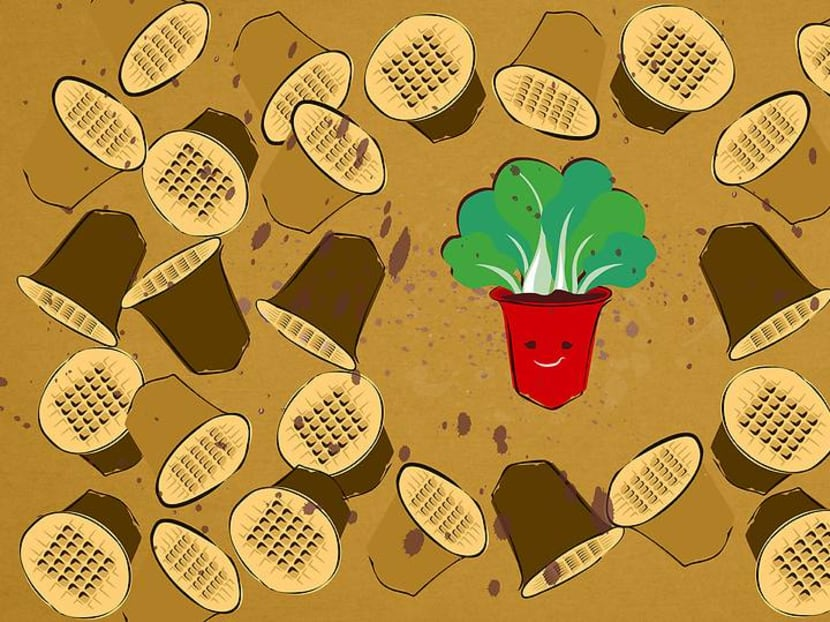 Your used coffee pods are being recycled to grow organic veggies in Singapore
