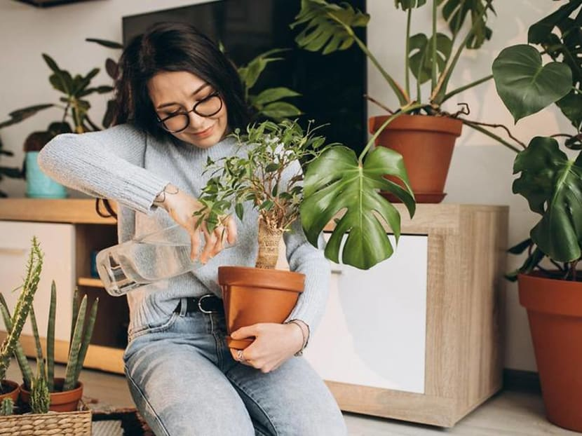 How to bring nature into your home with the right houseplants