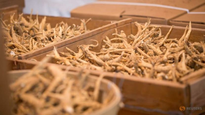 Ginseng piles up in Canada during COVID-19 pandemic despite Chinese demand