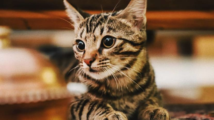 2 cats in New York become first US pets to test positive for COVID-19