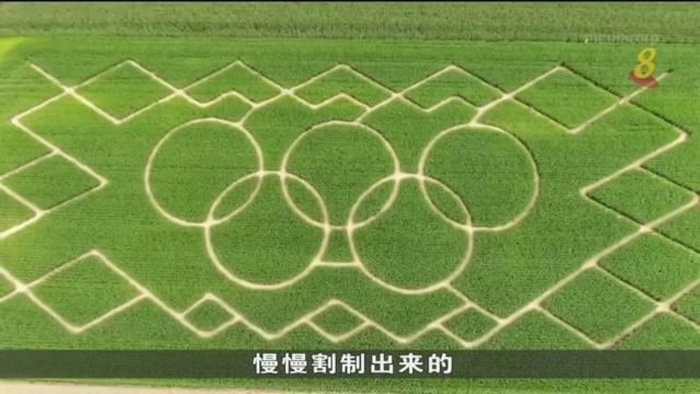 德国南部农家发挥巧思 稻田变奥林匹克迷宫