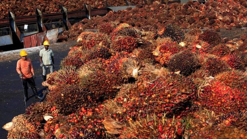 Malaysia's palm oil growers fall on hard times