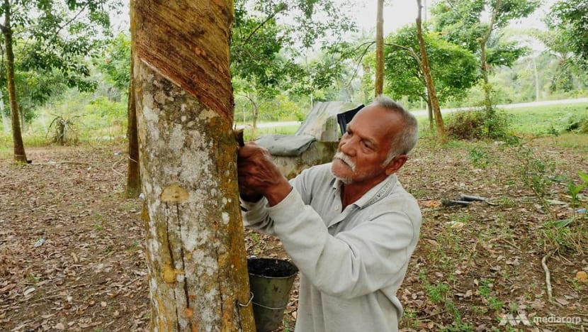 Malaysia's glove industry is booming amid COVID-19, but are rubber smallholders seeing the benefits?