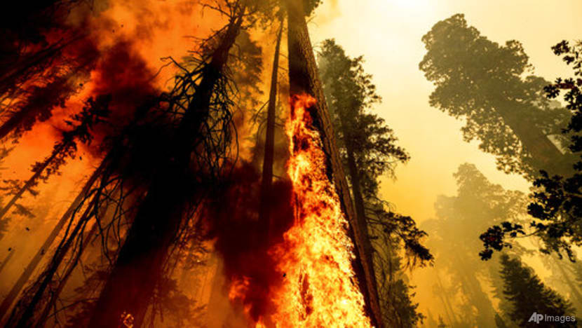 California firefighters scramble to protect sequoia groves