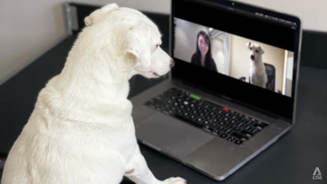 Online vets for pets in Singapore: We tried out Pawlyclinic (get it?)